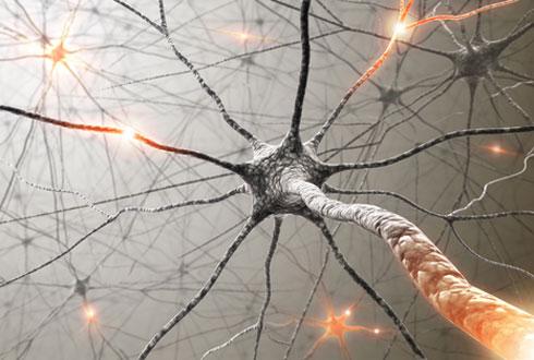 вб1-нейроны