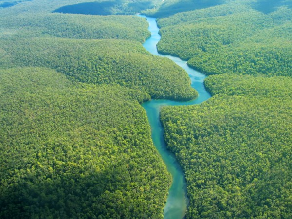 вб2-тропический лес