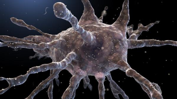 вб4-дендритные клетки1