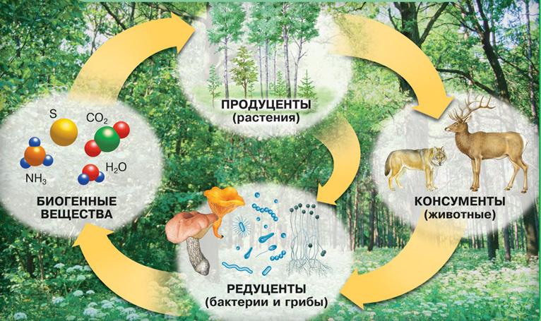 сбз3-экосистема