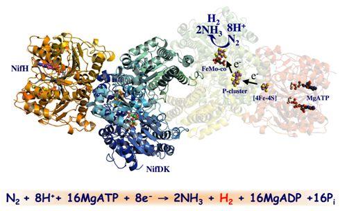сбз3-механизм фиксации азота
