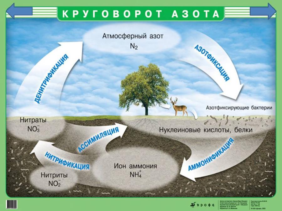 сбз3-круговорот азота