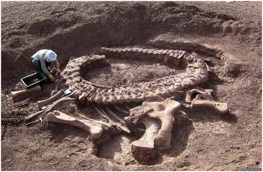 сбз16-кости динозавров