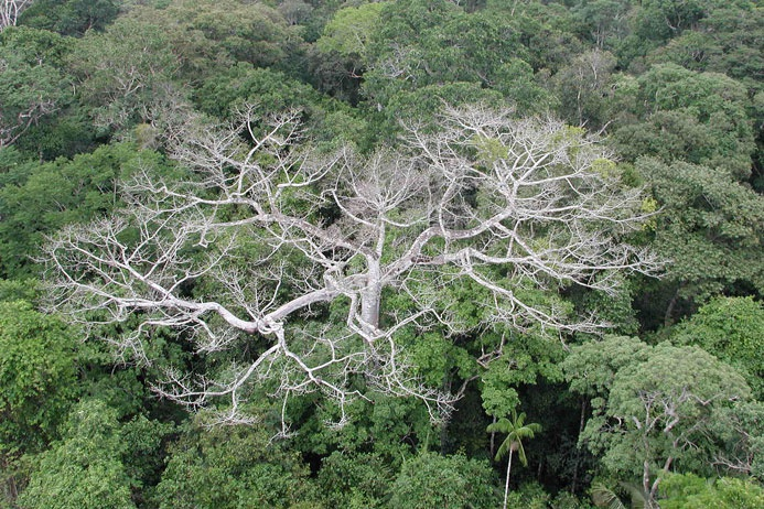 амазония2