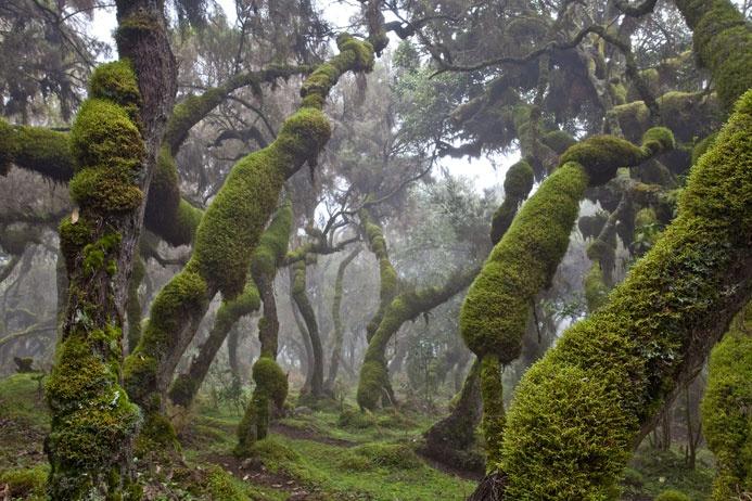 тропическте леса
