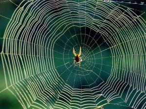 лс-пауков1