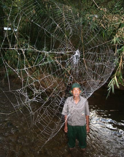 лс-паука2