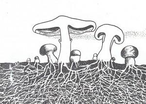 гр-гифы грибов