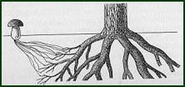гр-гриб-дерево
