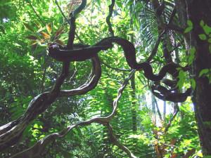 вр-тропические лианы