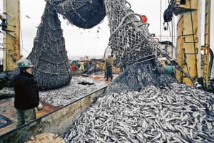 а-рыбный промысел