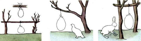 Как сделать ловушку для зайца