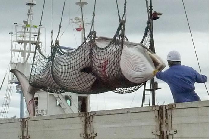 ловля китов страны
