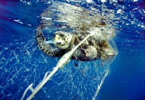 ок-черепаха1