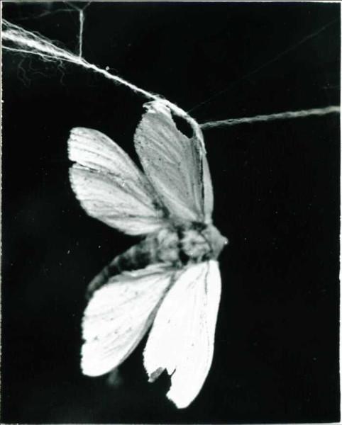 гт-бабочка