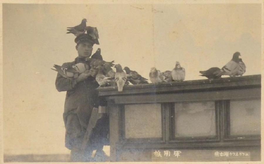 японец и голуби
