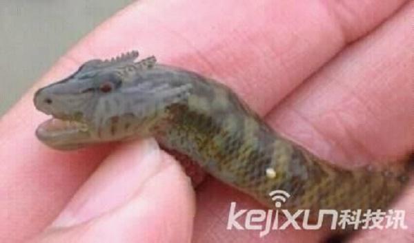 речной дракон