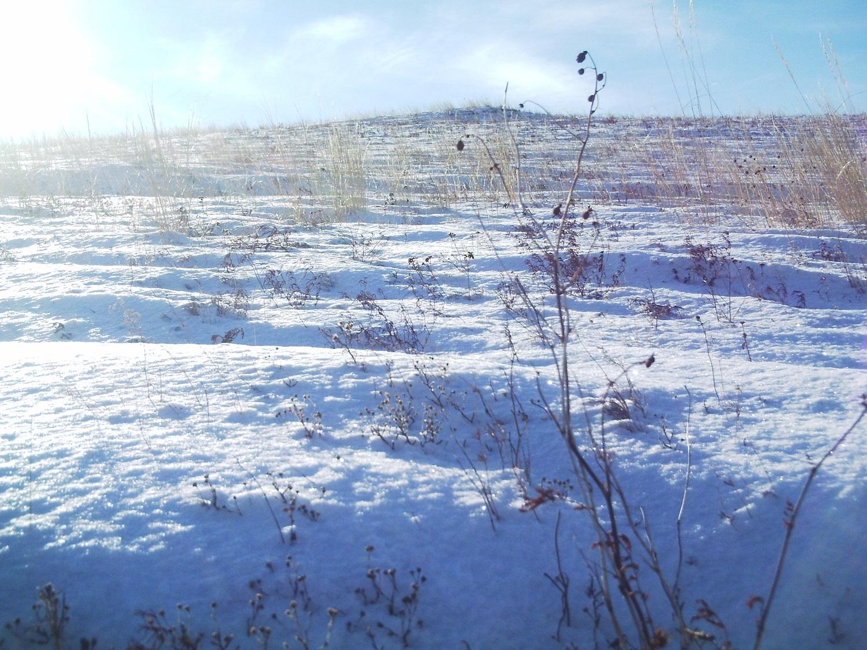 степь зимой