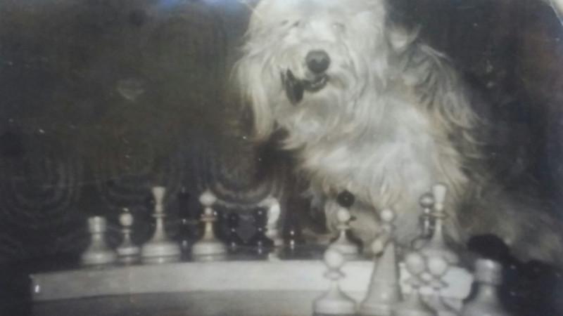 Наша пули любила утаскивать шахматные фигурки