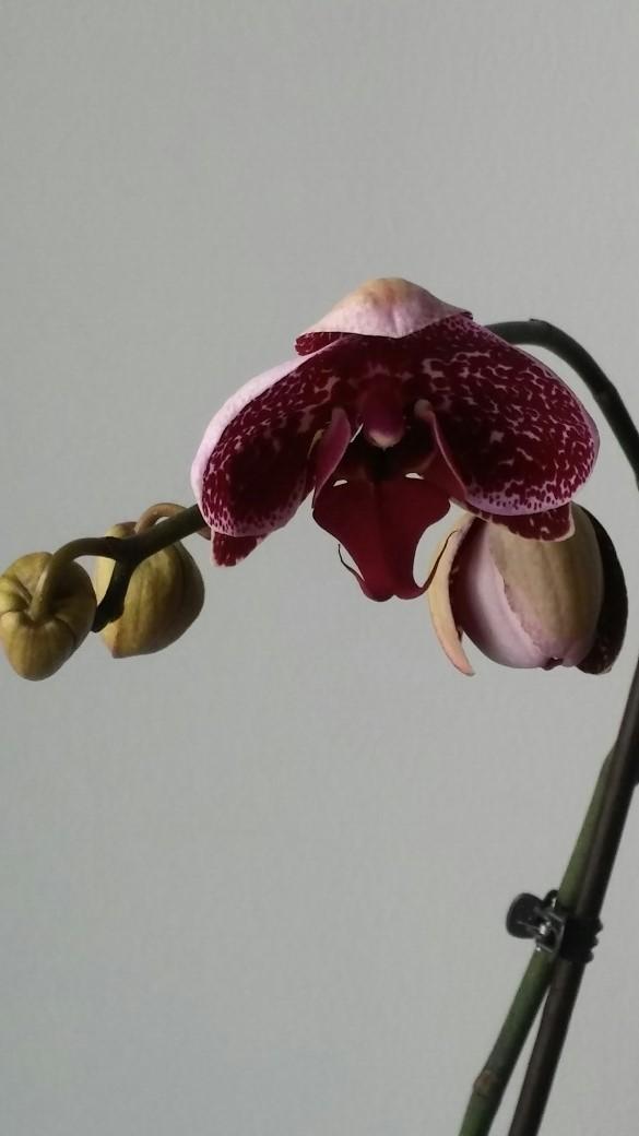 Там ещё один цветок на подходе