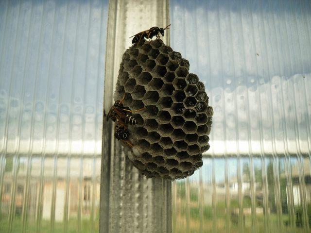 Неправильные пчелы.
