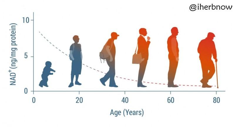 NAD+ и возраст