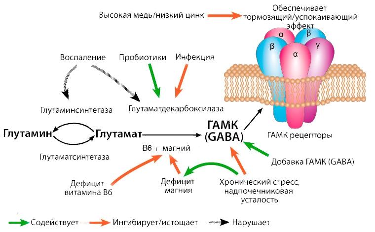 Принцип действия ГАМК