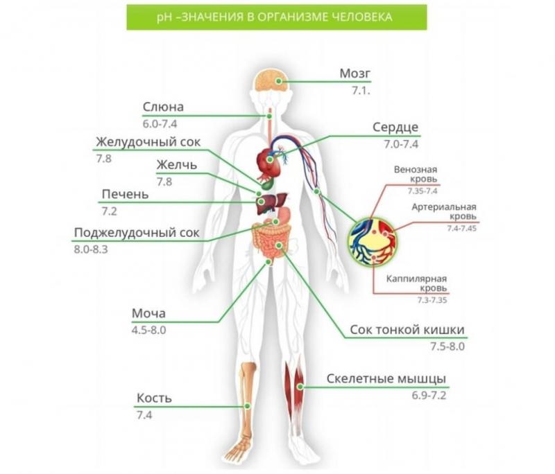 PH баланс в организме человека в органах