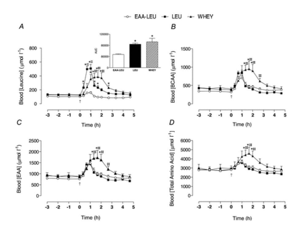 Усвоение и дозировка протеина — исследование