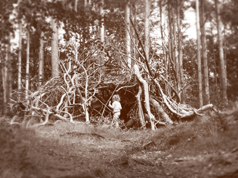 forest_sprites_475