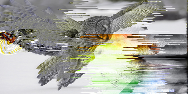 OWL2_600
