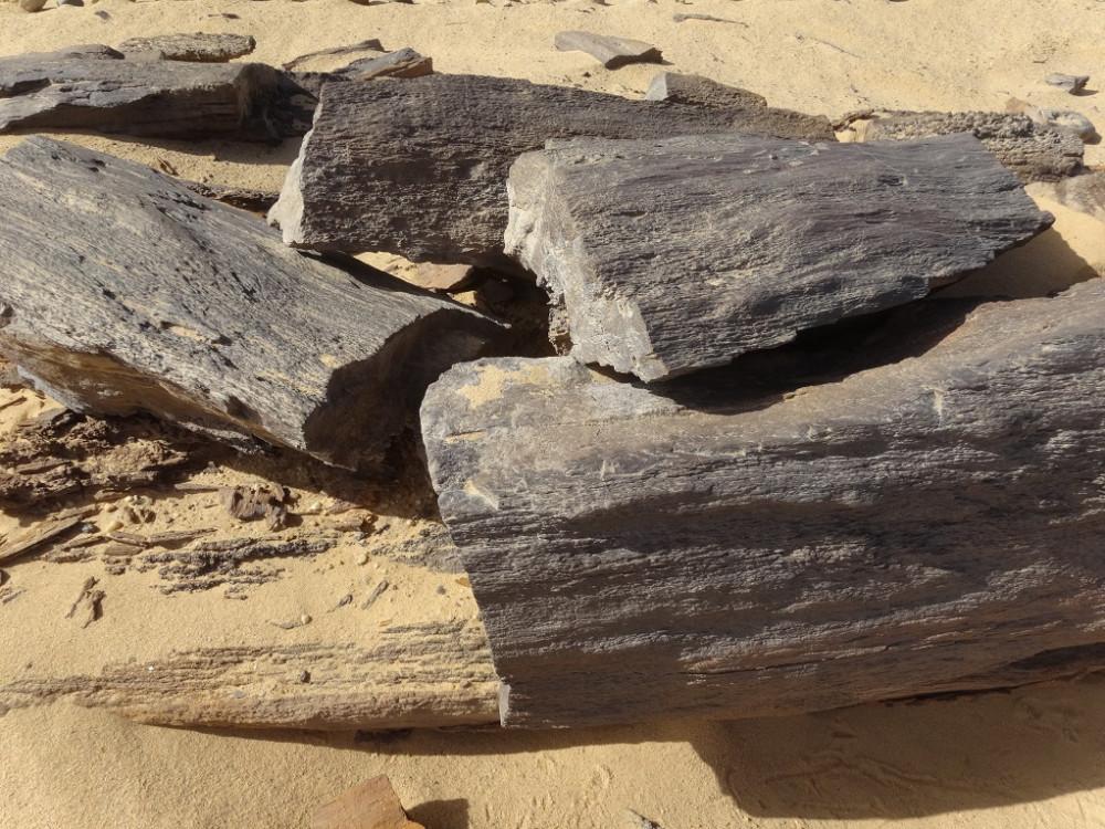 Мощеная дорога Хеопса. logs-at-the-petrified-forest