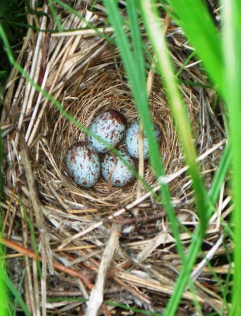 Bird Eggs along Taughannock Creek