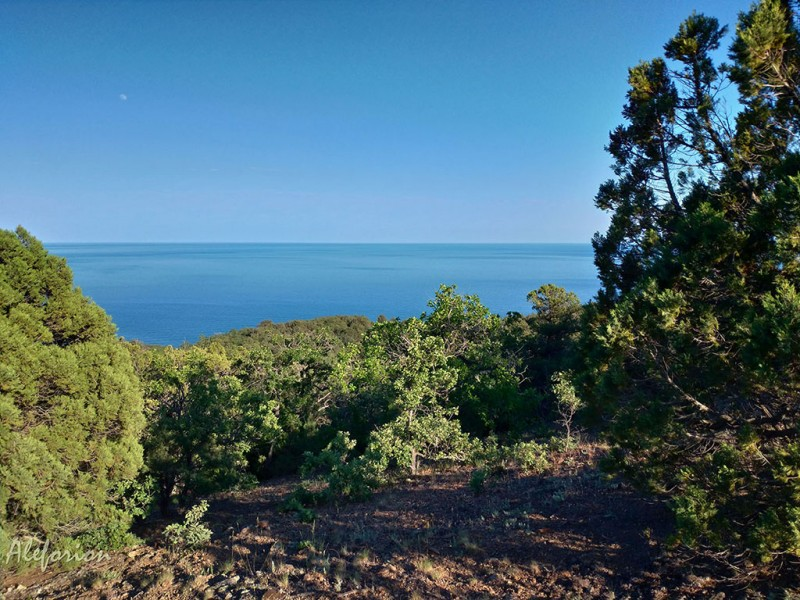 """Вид на море из """"леса"""". Лес в кавычках потому, что по сравнению с лесами средней полосы или субтропиков он редковат. Но от этого не менее очарователен."""