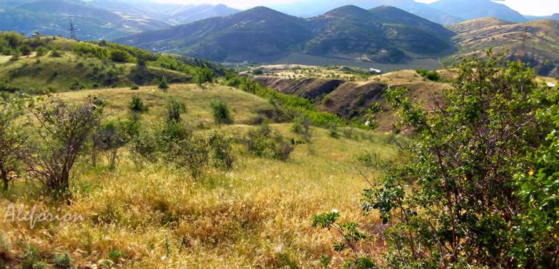 Золотая трава, синие горы.