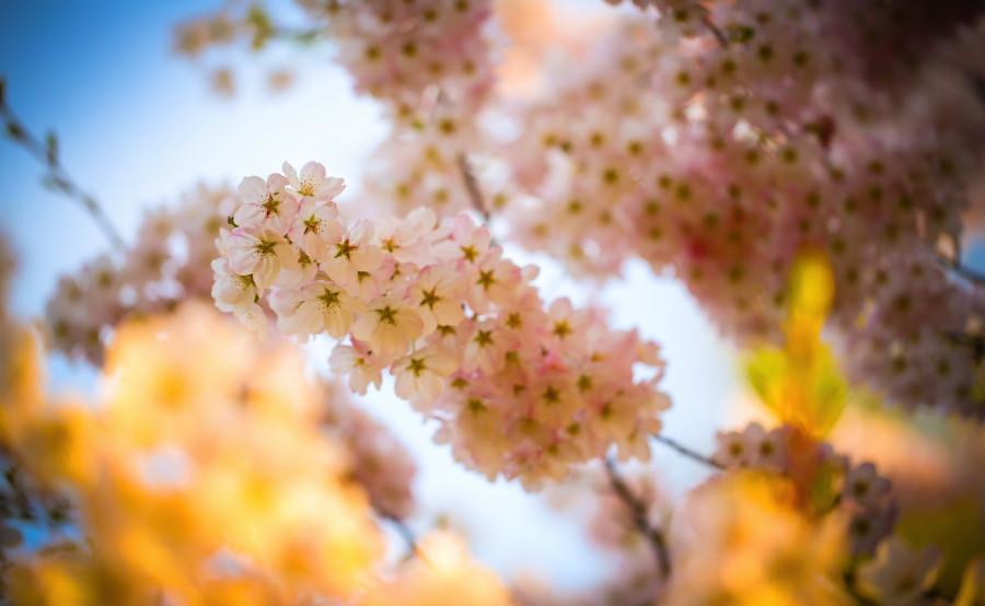 spring_beauty-wallpaper-3840x2400