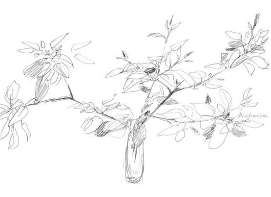 Leaves-006-555