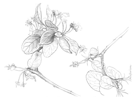 Leaves008-555