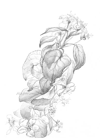Leaves002-555-C