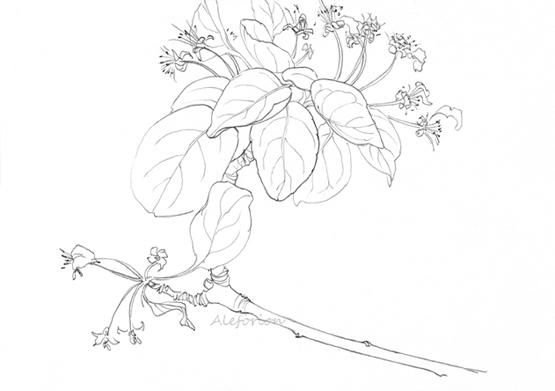 Leaves003-555-C