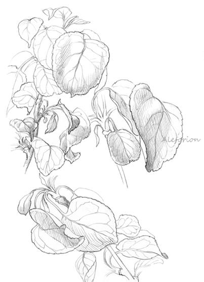 Leaves004-555-C