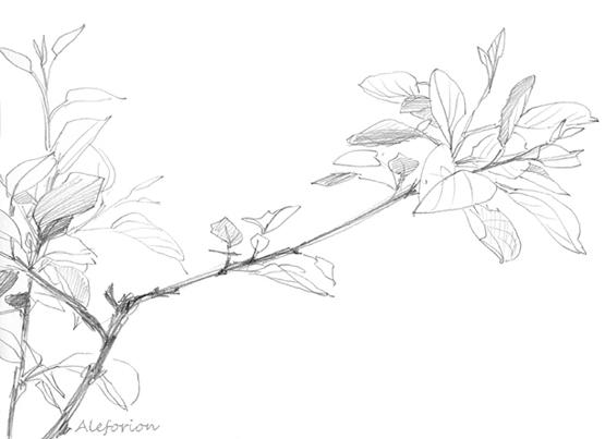 Leaves005-555