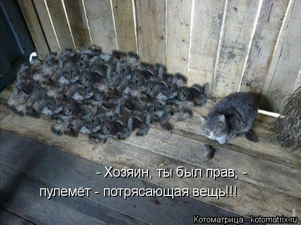 kotomatritsa_yq