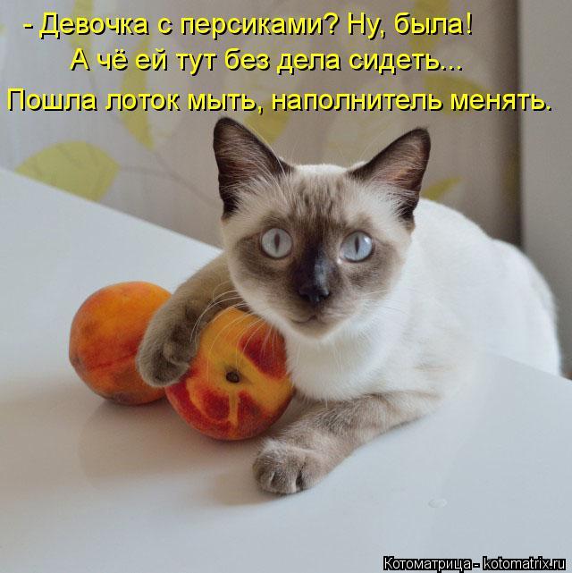 kotomatritsa_kC