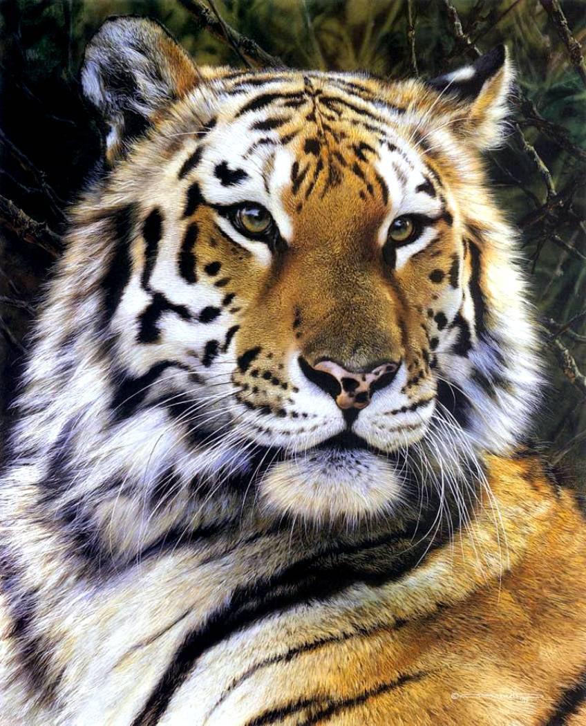 animal_artist_1
