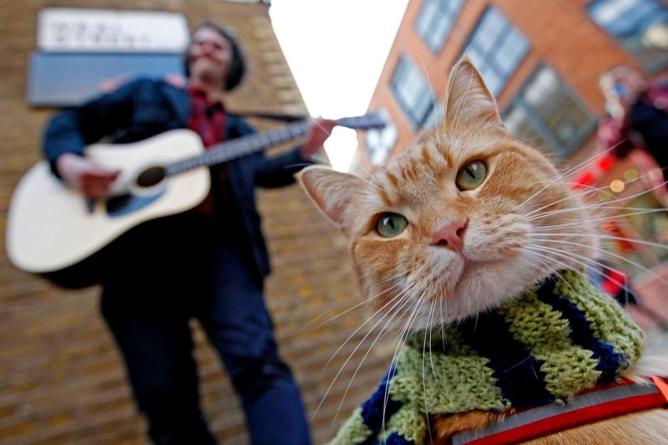1352387700_street-cat-named-bob-9