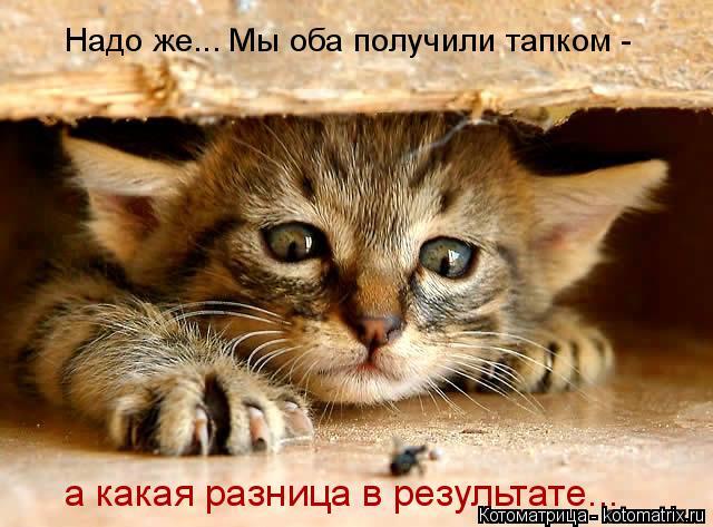 kotomatritsa_C