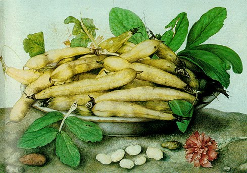 giovanna-garzoni-italian-baroque-era-painter-1600-1670-a-bowl-of-broad-beans-1350542659_org