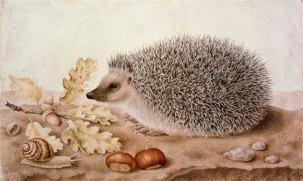giovanna-garzoni-italian-baroque-era-painter-1600-1670-hedgehog-in-a-landscape-1352003184_b