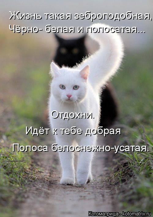 kotomatritsa_q